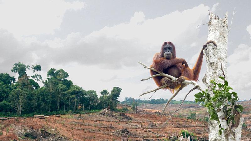 deforestazione-piantagioni-olio-di-palma