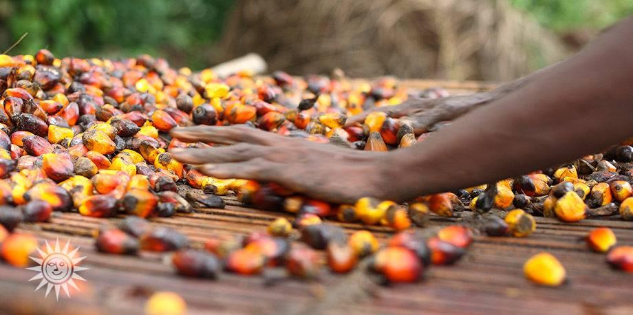 frazionamento-olio-di-palma