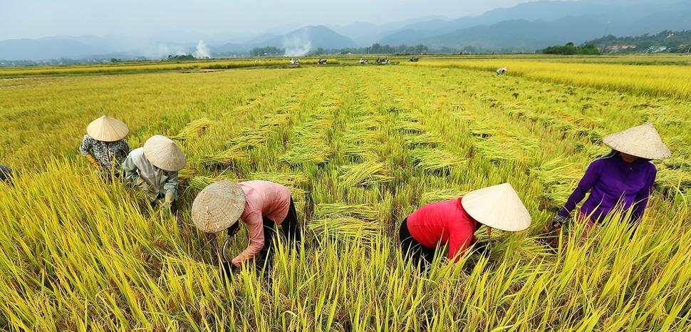 industria-alimentare-agricoltura-sostenibile
