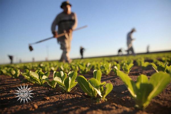 industria-alimentare-sostenibile-agricoltura